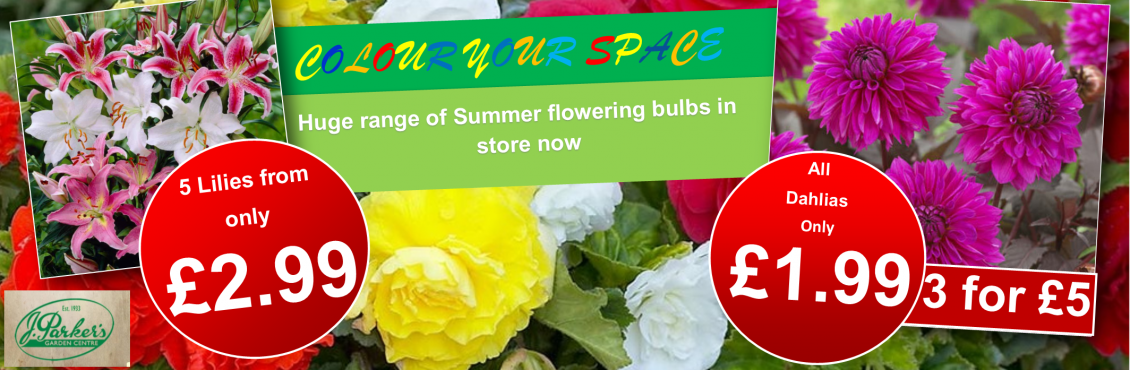 Summer bulbs png