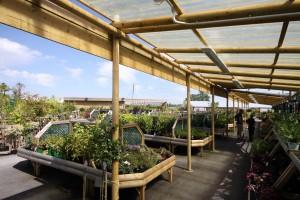 Mottram Garden Centre