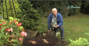 How to plant Dwarf Narcissi