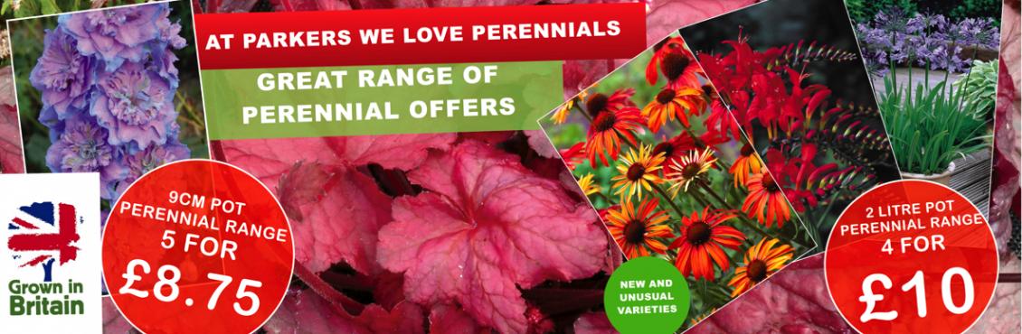 Perennial banner proof