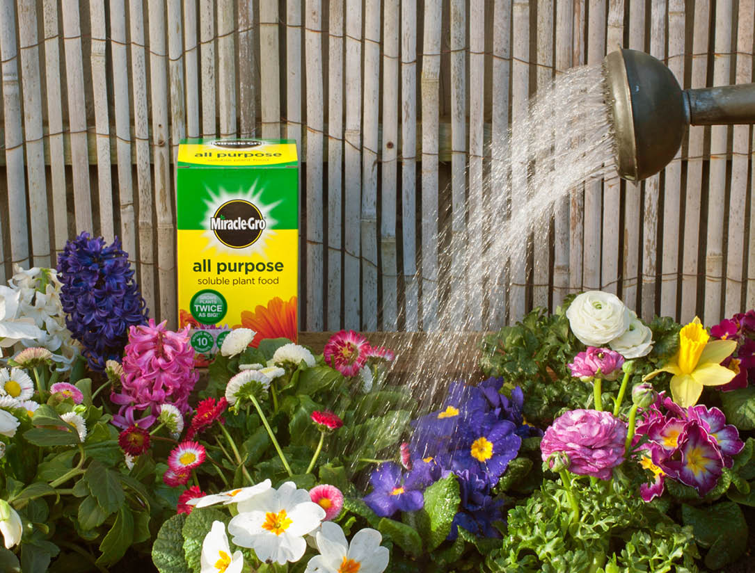 miracle gro soluble