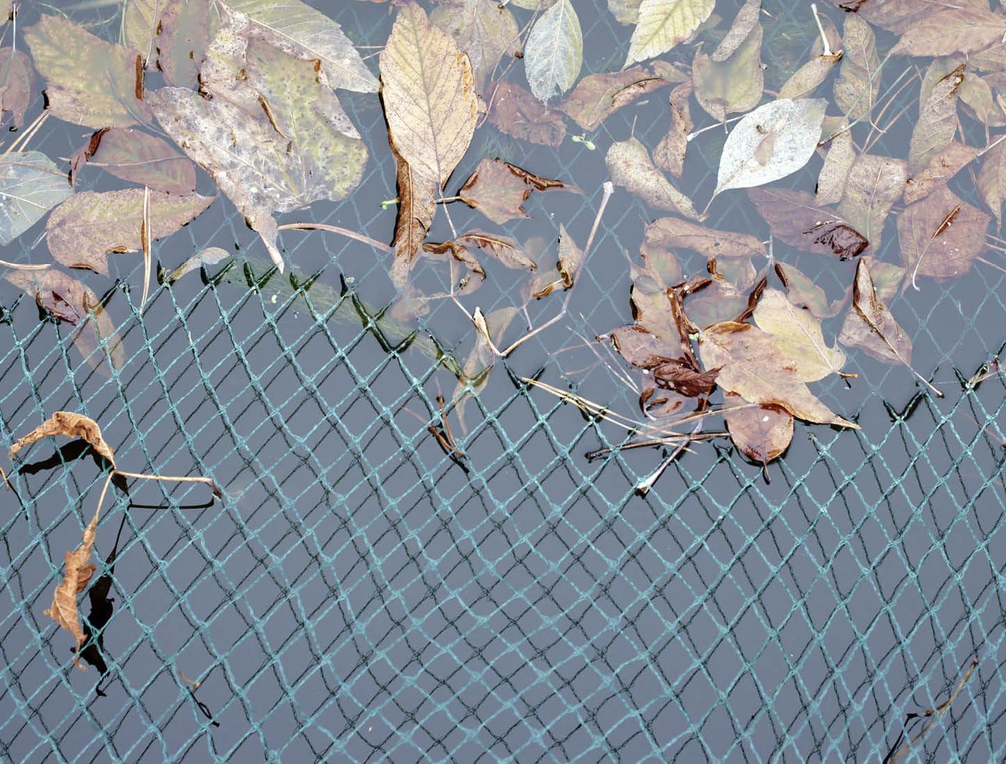 Autumn Pond Netting