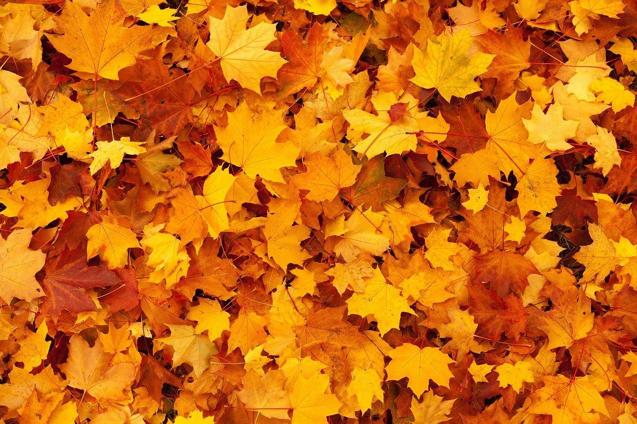 autumn-g32df7bda3_1280
