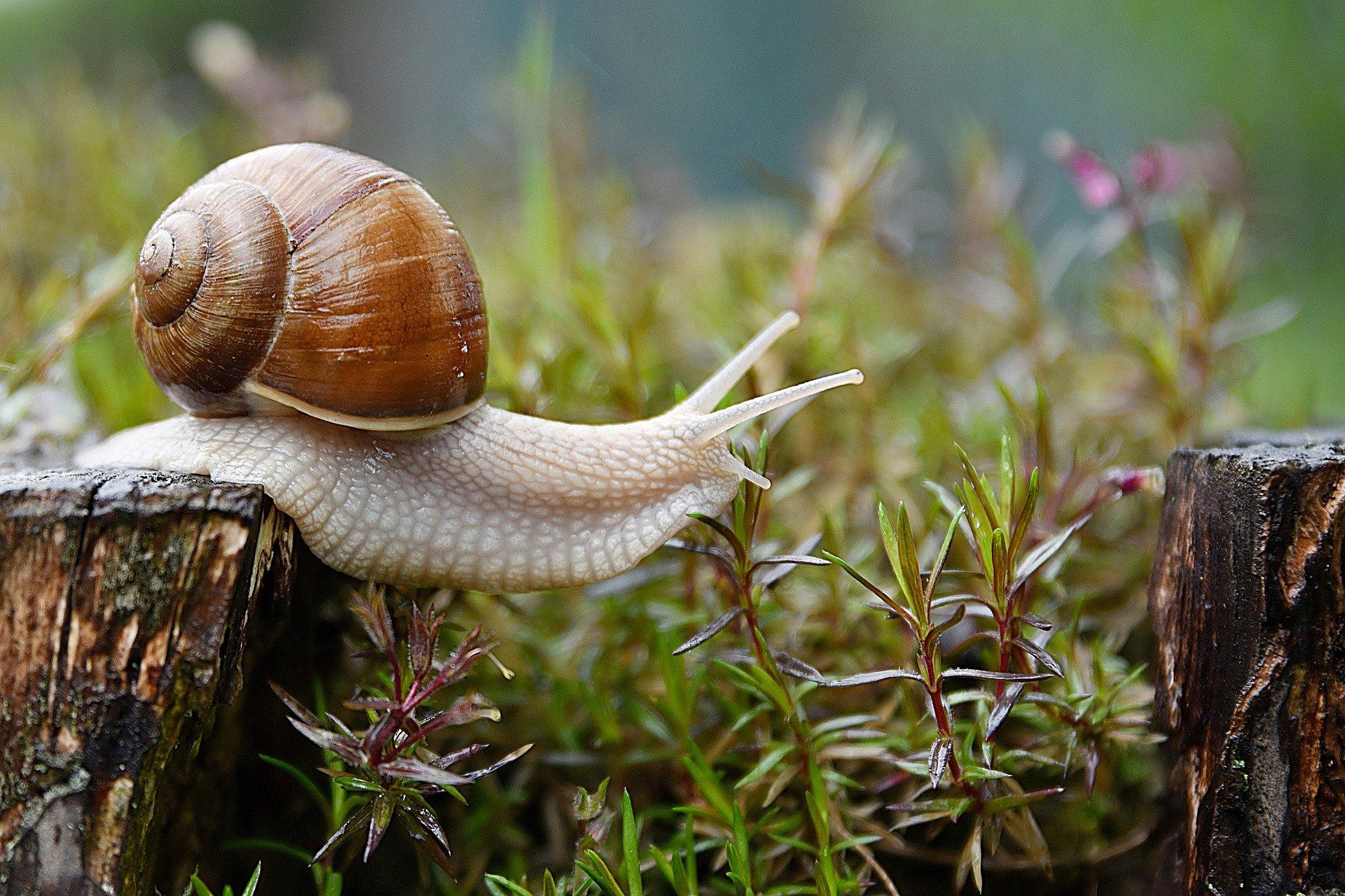 snail-ged0aa97aa_1920